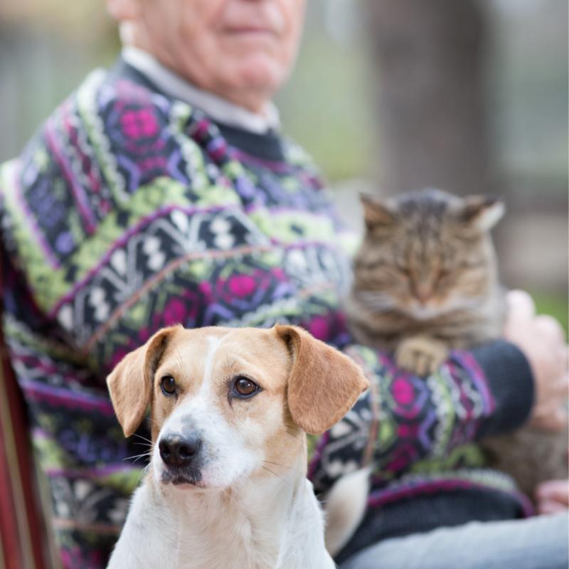 Seniors for Seniors Pet Adoption Events