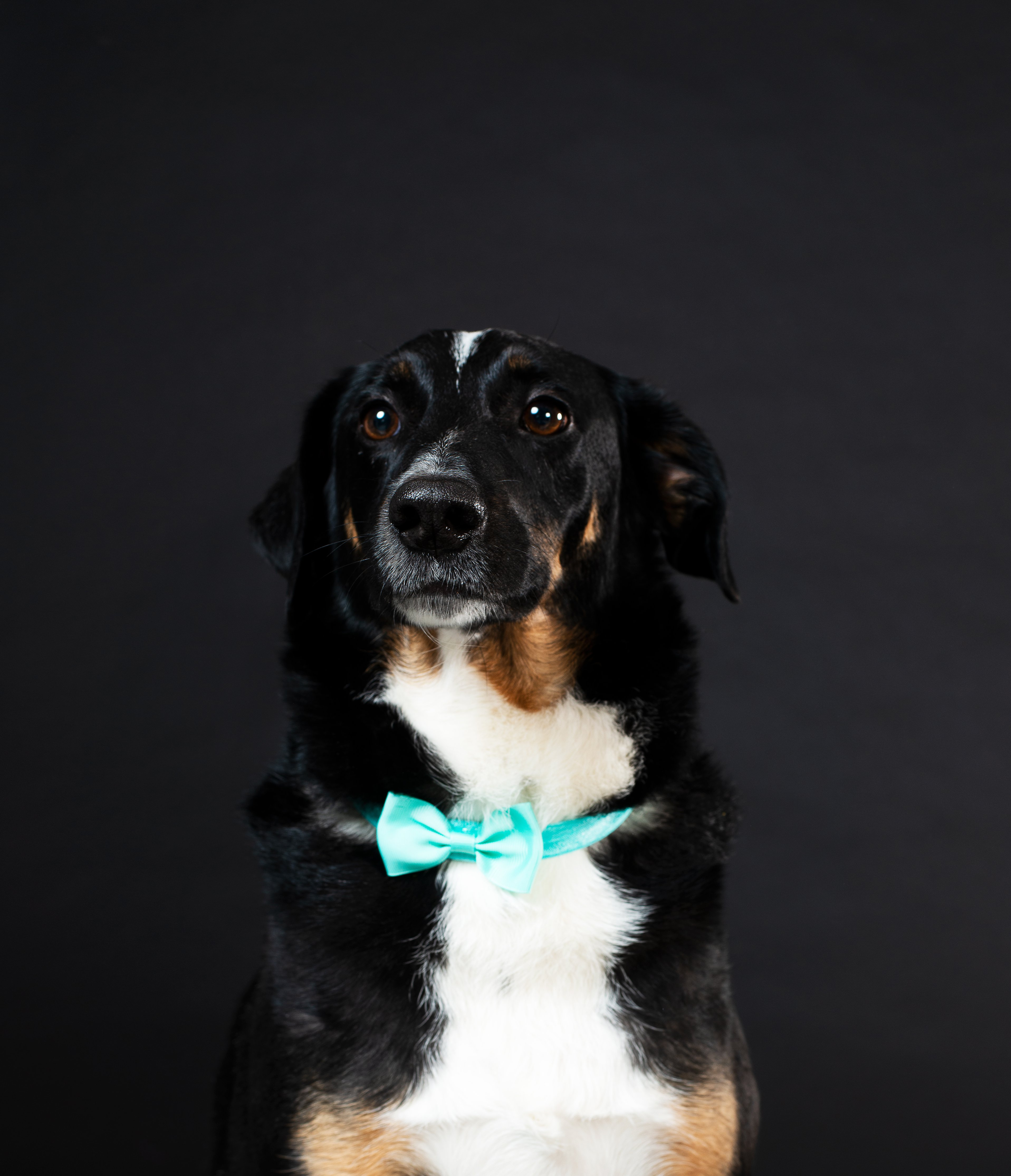 Prom for Paws